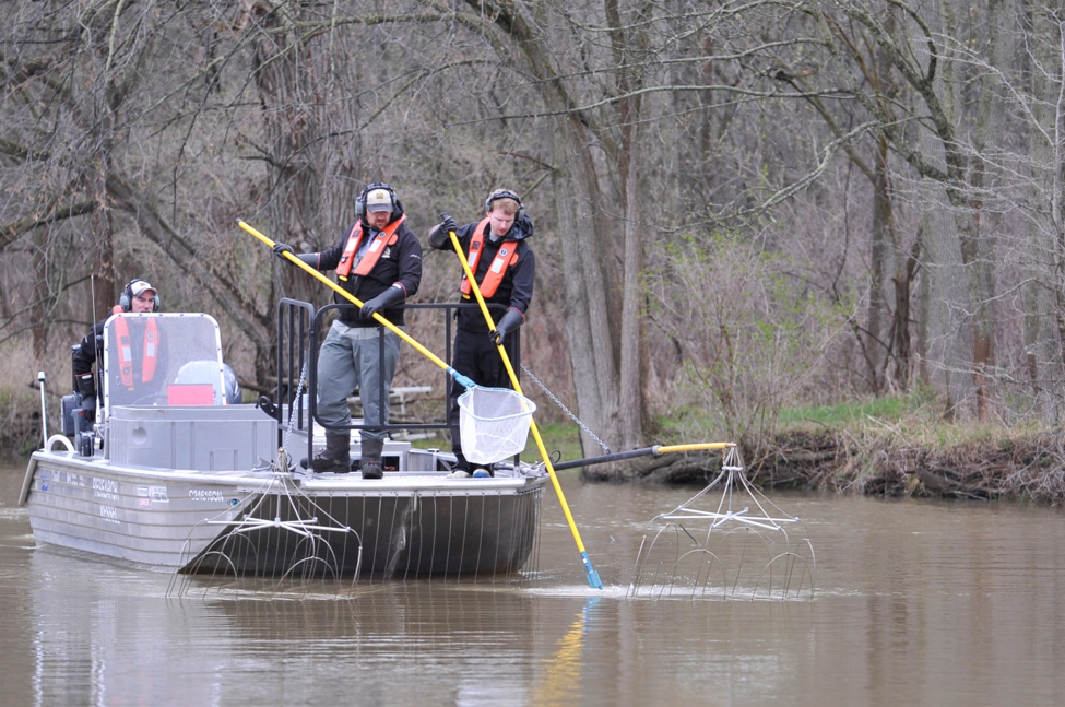 Boat crews from DFO and MNRF participating in operation response activities (boat electrofishing) during a 2017 Asian carp response training exercise